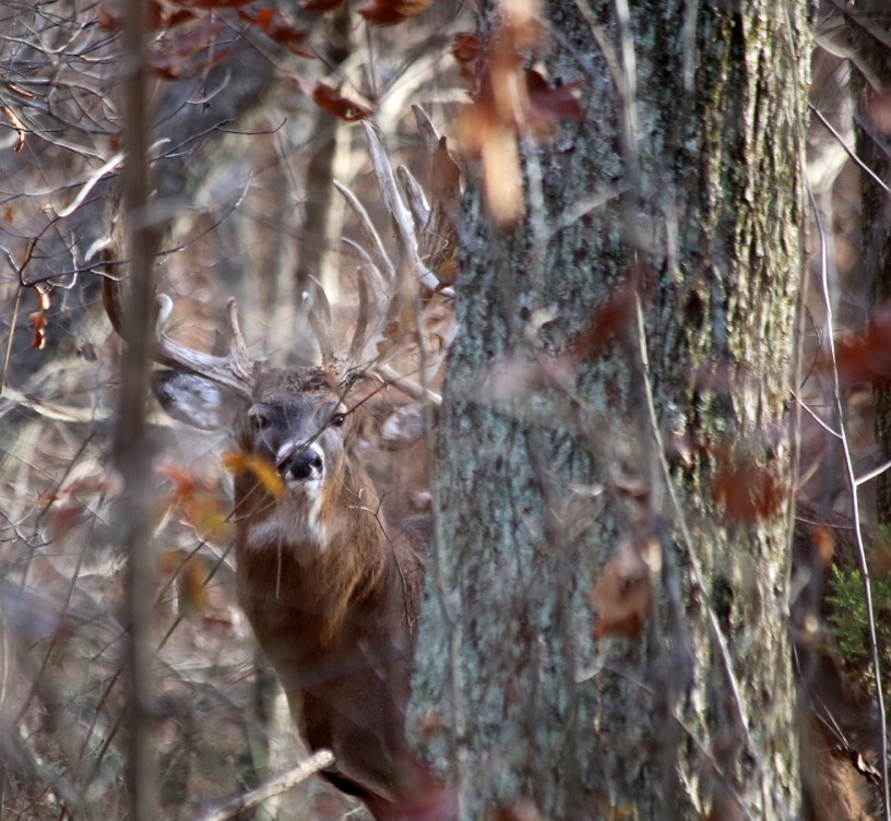 Trophy Buck hidden in the woods!
